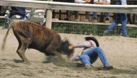 Rodeo, cowboy steer wrestling