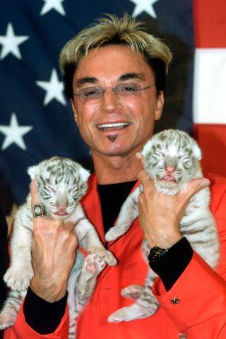 White Tiger Cubs Born in Las Vegas